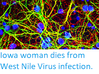 https://sciencythoughts.blogspot.com/2017/09/iowa-woman-dies-from-west-nile-virus.html