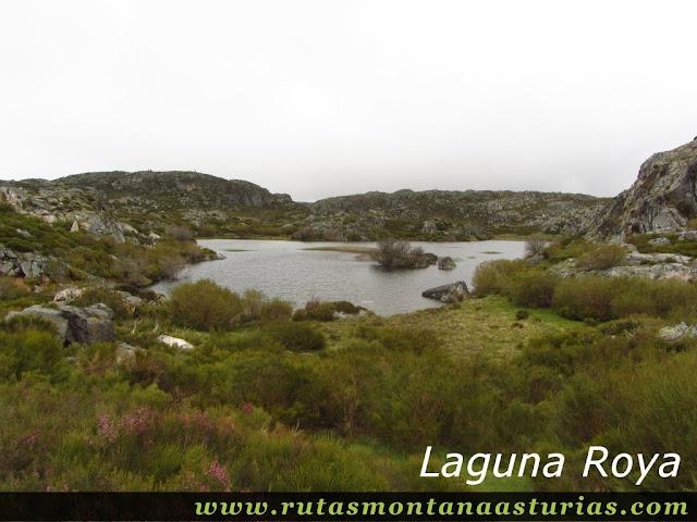 Laguna Roya