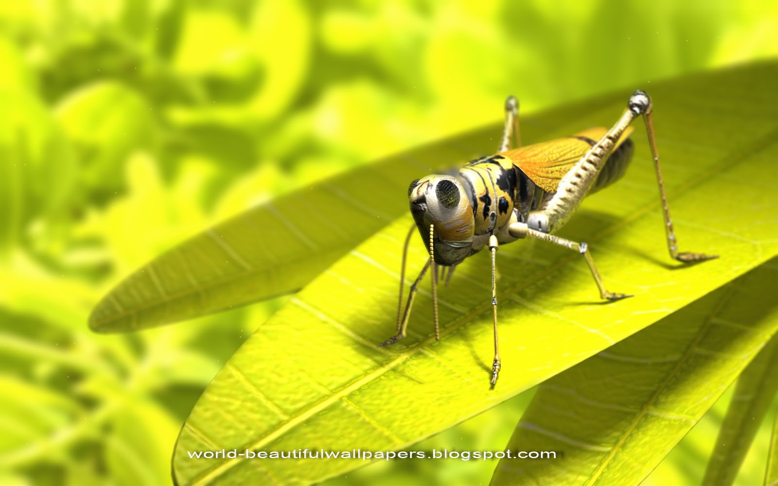 wallpaperspiolt: grasshoppers wallpaper