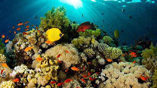 Wisata Bahari Taman Laut Tumbak Minahasa Tenggara