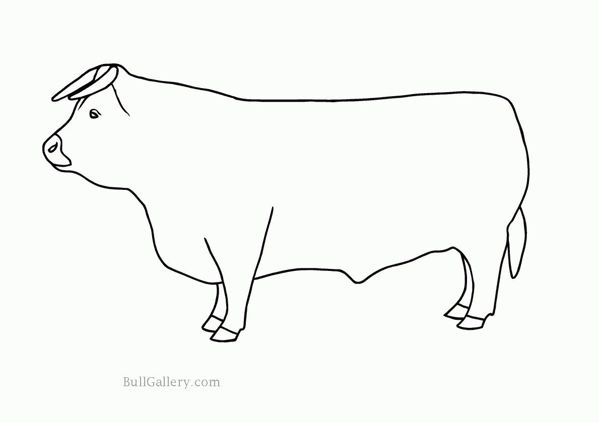 Bull Coloring Pages - Kidsuki
