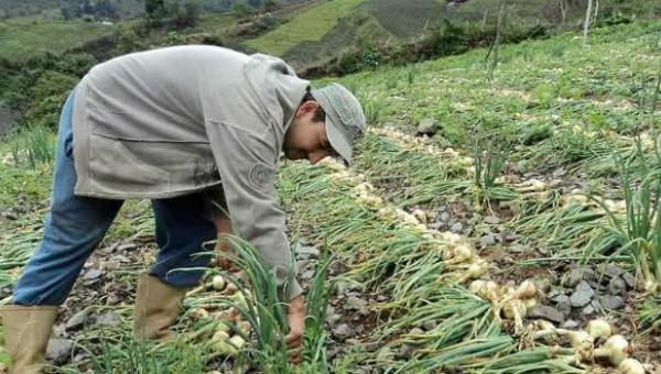 """Gremio de productores advierte sobre una """"emergencia agroalimentaria"""" en Venezuela a raíz de la escasez"""