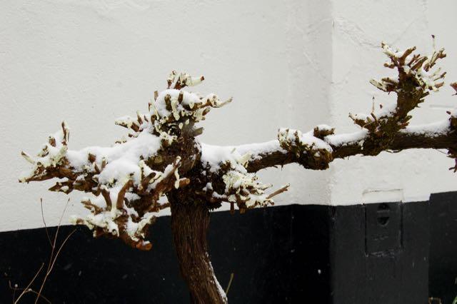tuinverhalen.blogspot.nl