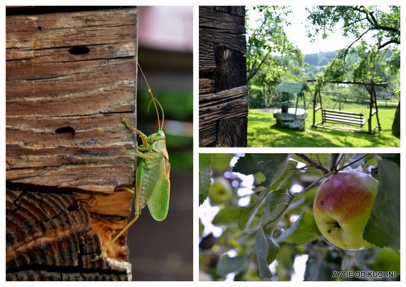 swierszcz, dom z bali, drewniany dom, sad, jablon, szarlotka, zycie od kuchni, dom babci