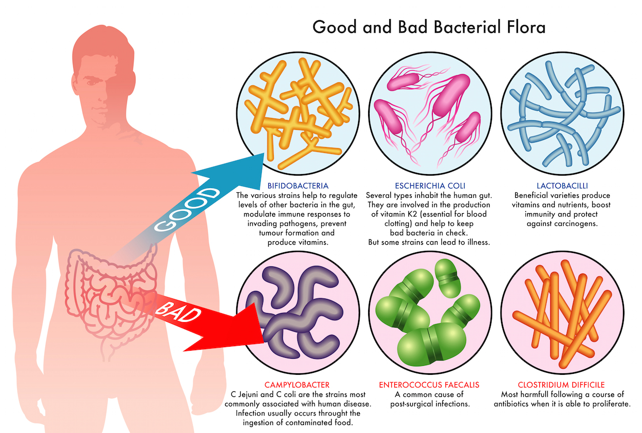 Intestinal infections: treatment and prevention