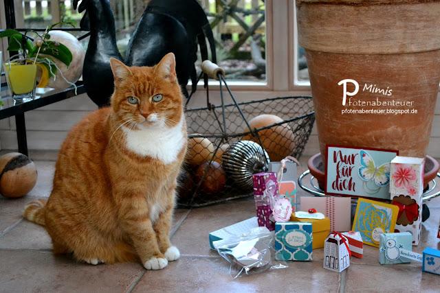 Katze Mimi präsentiert viele verschiedene Swaps