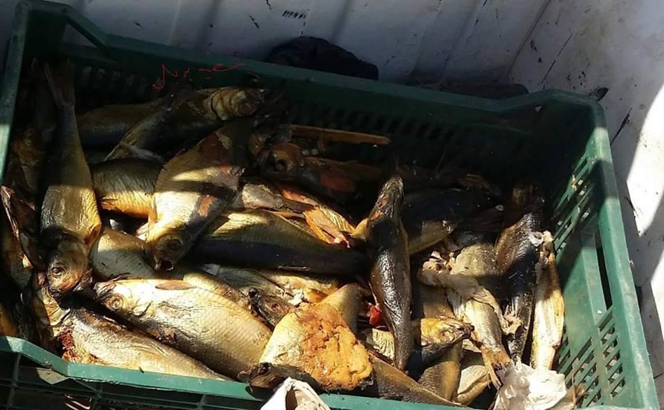 بالصور ضبط لحوم وأسماك وكبدة «فاسدة» بـمحلات « باباعبدو» بالفيوم