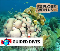 http://www.thedivebus.com/dive-the-best-of-curacao/guided-dives-explore-us-prepare-amazed/the-dive-bus-house-reef/