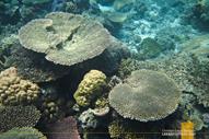 Malwawey Coral Garden Coron