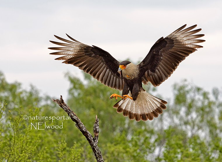 South Texas Photography Trip
