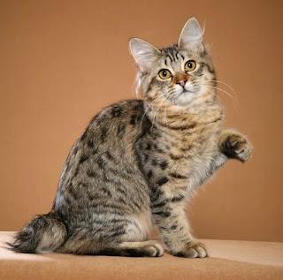 Tips mudah memelihara dan merawat kucing dengan baik