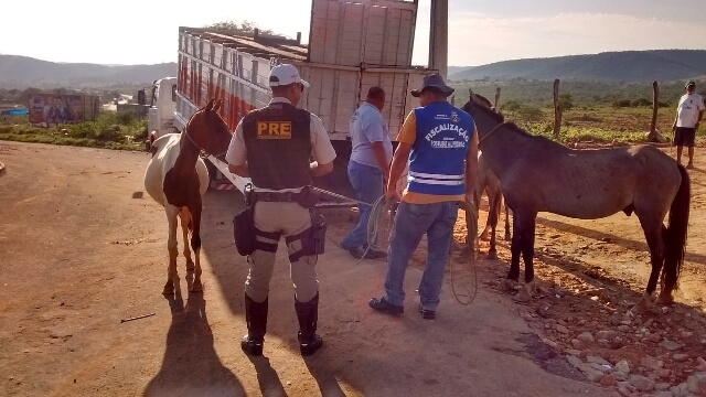 PRE captura animais soltos nas margens de rodovias da região Sudoeste
