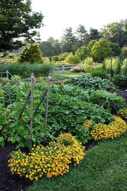 Dreaming Gardens