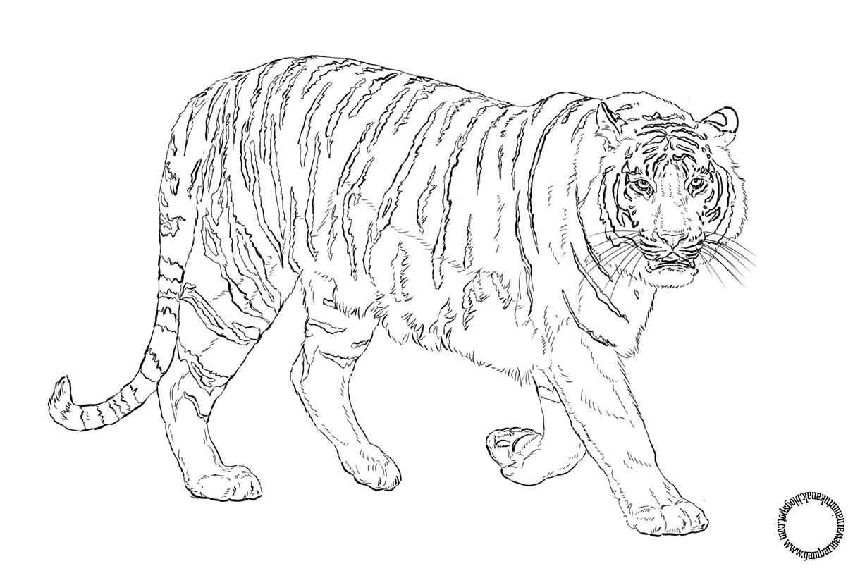 Картинки рисунки животные красной книги