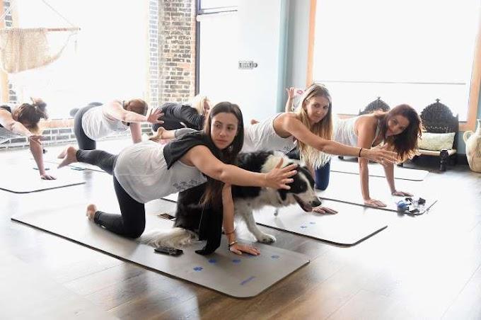 We Tried It: Dog Yoga a.k.a. 'Doga'