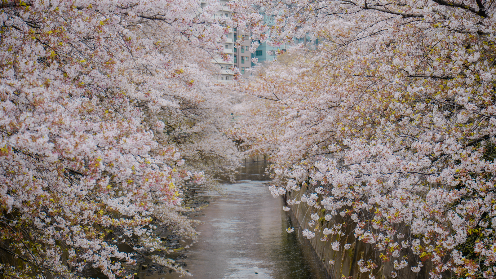 Best photo spot for cherry blossoms in Tokyo, Tokyo's Not So Secret Cherry Blossoms Spots That You Might Not Know Of - Style and Travel Blogger Van Le (FOREVERVANNY.com)