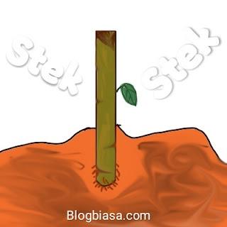 5 Manfaat, keuntungan, kelebihan stek batang, daun & akar pada tanaman