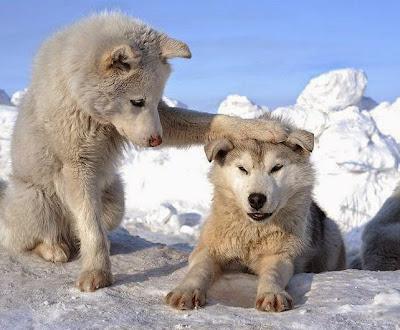 foto tierna de dos perros