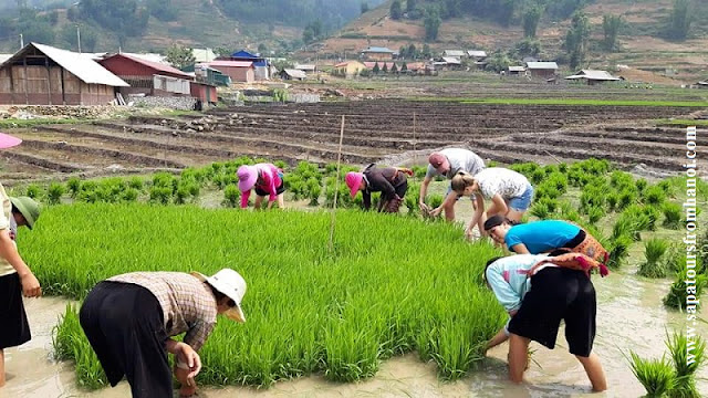 What are the most attractive tours in Sapa?