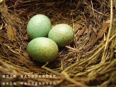 Grüne Vogeleier