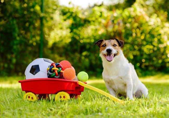 Akcesoria Zolux dla psa