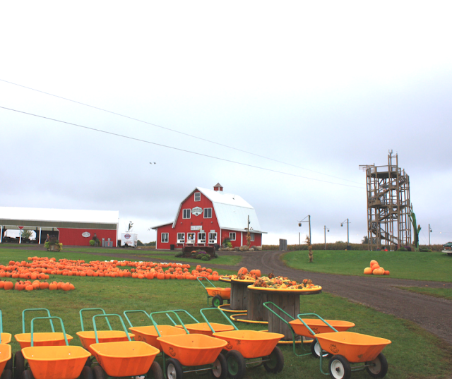 Harvest time at Richardson Corn Maze in Spring Grove, Illinois.