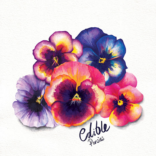 Food illustration - Edible Pansies