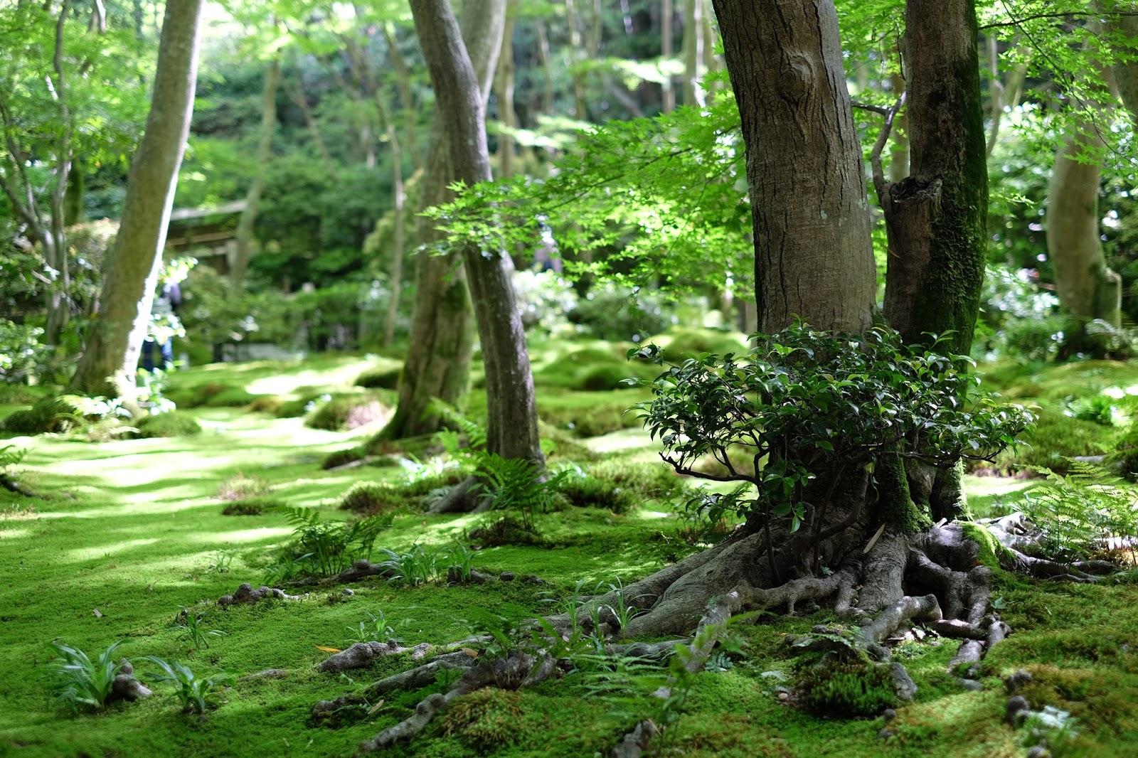 gio-ji moss garden arashiyama