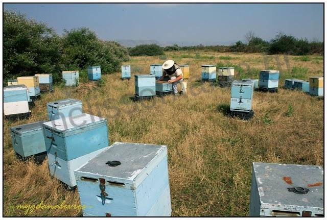 Οικονομική απόδοση της Μελισσοκομίας