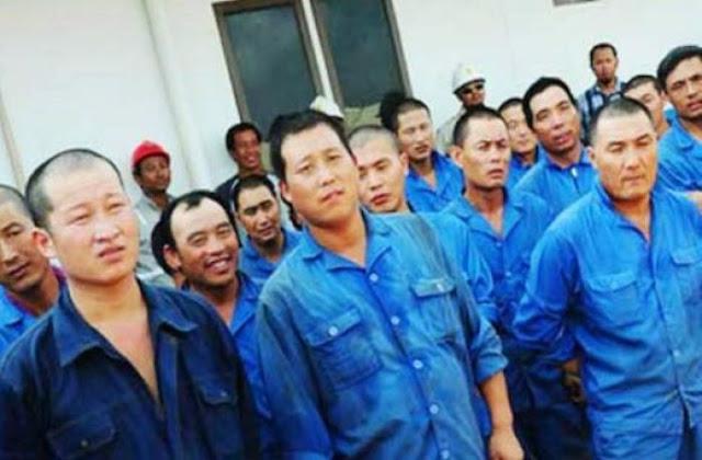 Bangun Pabrik Baru di Manokwari, Ratusan Buruh Cina Akan Didatangkan