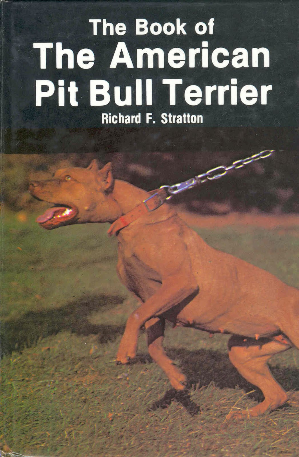 CH CAROLINA KENNELS' TERMITE (4XW) ROM | Game Dog World