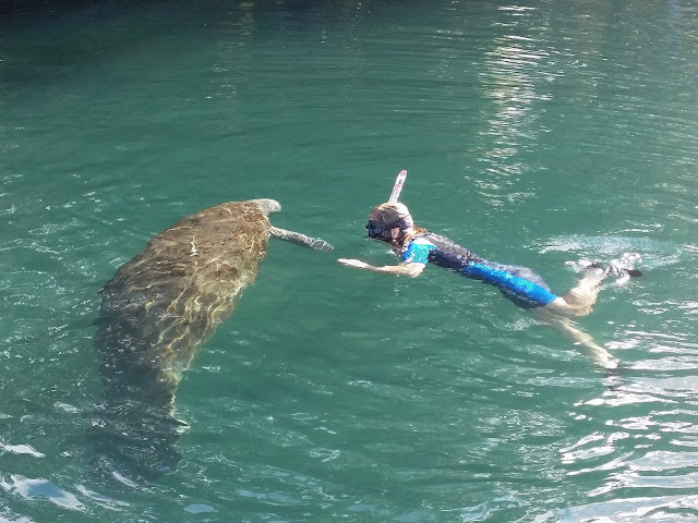 snorkeling with a manatee