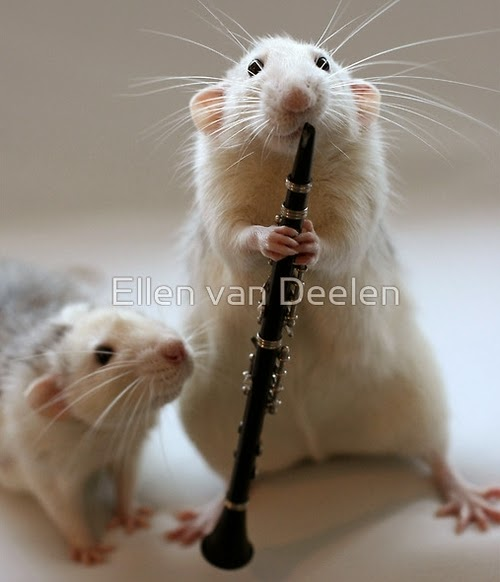 16-Watching-Me-Play-The-Clarinet-Musical-Dumbo-Rat-Ellen-Van-Deelen-www-designstack-co