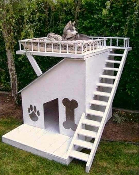 casinhas de cachorro