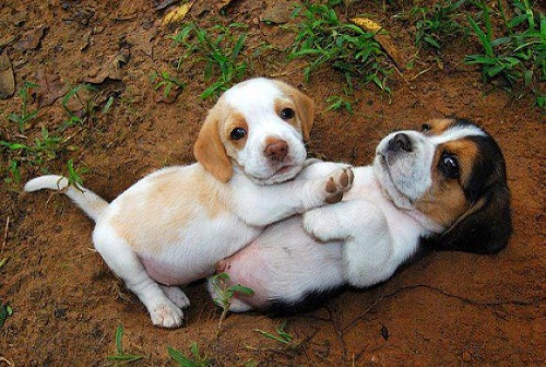 Cute Pet Dogs love