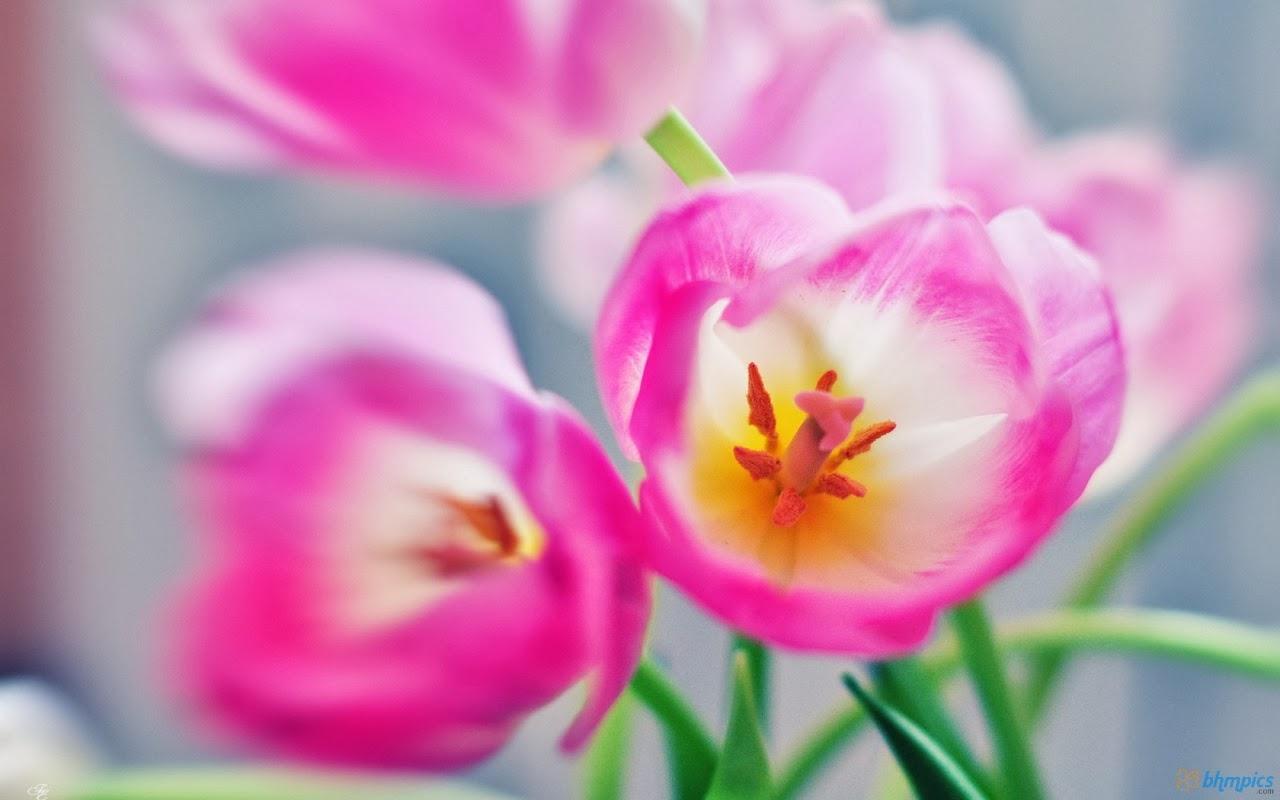 Wallpaper Islamic Informatin Site Flower Desktop Wallpapers