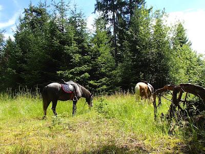 Orawa, grzyby na Orawie, grzyby w lipcu, grzybobranie w lipcu, grzybobranie na koniu, borowik szlachetny Boletus edulis, pieprznik jadalny Canthaellus cibarius