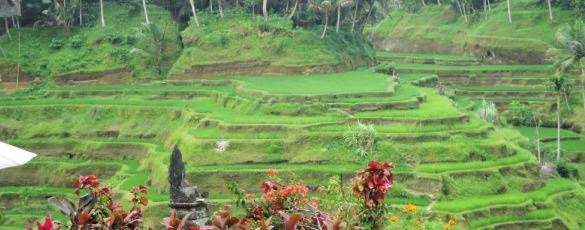 Tegallalang Ricefield Terraces - Gianyar, Ceking, Holidays, Tours, Attractions