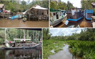 Keindahan Taman Nasional Tanjung Puting