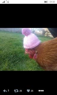 La gallina friolenta