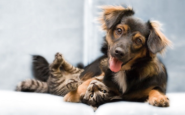 Cat and Dog Wallpaper 3
