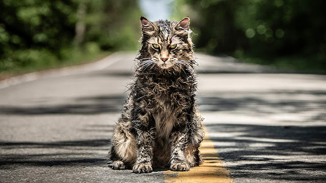 glaring cat on the road