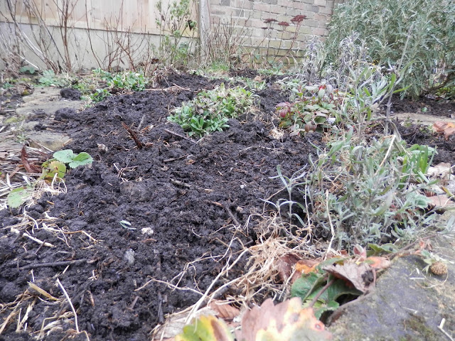 Diary of a suburban edible garden, February 2017. From uk garden blogger secondhandsusie.blogspot.com #gardenblogger #polyculture #ediblegarden #suburbangarden