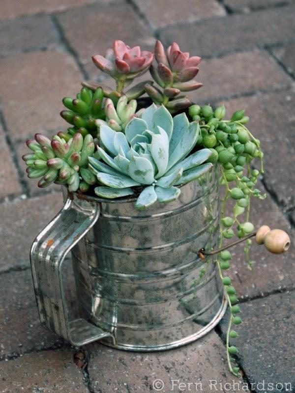 Cottage flavor pretty succulent arrangements - Cool succulent plants ...