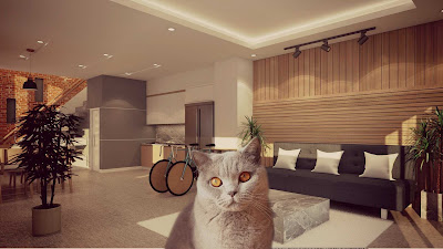 imagenes de gato
