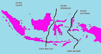 Wilayah persebaran fauna di Indonesia