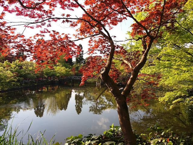 Aceri rossi tempio buddista Eikan-dō Kyoto