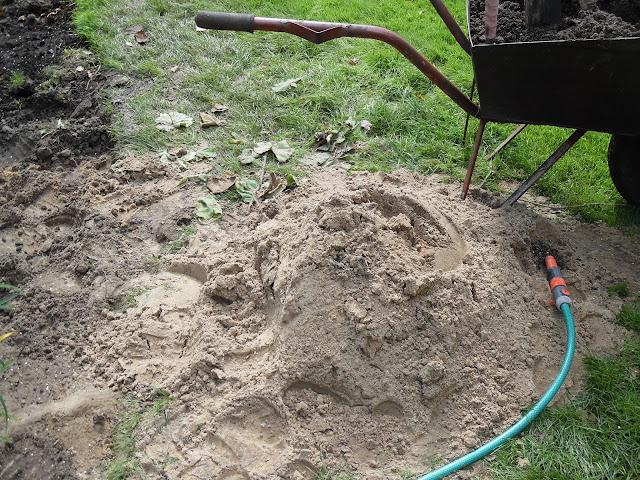 piaszczysta gleba