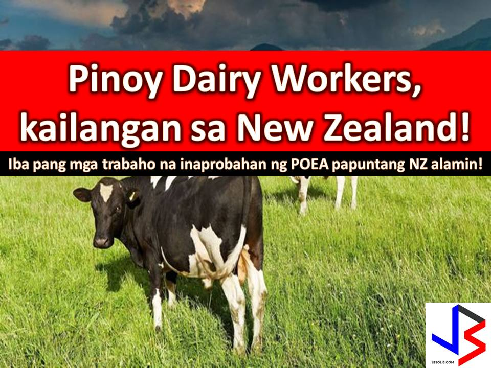 "Filipino farm workers in New Zealand, particularly in South Island, will become eligible for residence under a new visa. This is a good news to all Filipinos who want to work in New Zealand as dairy workers.  Over the last few years, the demand for experienced and reliable dairy farm workers has grown rapidly in New Zealand, as the industry continues to expand.  Due to labor shortfall, the dairy industry has become dependent on migrant workers, mainly from the Philippines.  In the website of Philippine Overseas Employment Administration (POEA), three recruitment agencies have been approved to recruit dairy farmers to New Zealand.  1.  The Omanfil International Manpower Development Corporation who is hiring for dairy farm assistant with an ""open number"" of the job order. This means they are hiring as many Filipinos as they can.  2. The Parman Inc. with one job vacancy for dairy farm assistant  3. The Asia Rich International Management and Contractor Service Inc is in need of 66 dairy farmer.  Please scroll down below to get the address of above-mentioned recruitment agencies if you are interested to apply.   Jbsolis.com is not affiliated nor connected with any recruitment agencies listed in this article. Any contract you entered with them is at your own account and risk. All information is for general purpose only. Sponsored Links  The following are jobs approved by POEA for deployment to New Zealand. Job applicants may contact the recruitment agency assigned to inquire for further information or to apply online for the job."