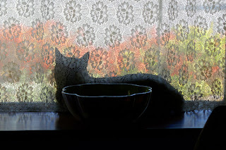 Doctor Pyewacket, the cat, looking out window with lace curtains and outside bushes